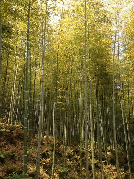Tenryu-ji, Bamboo Forest, Kyoto - Leslie Rowley S95