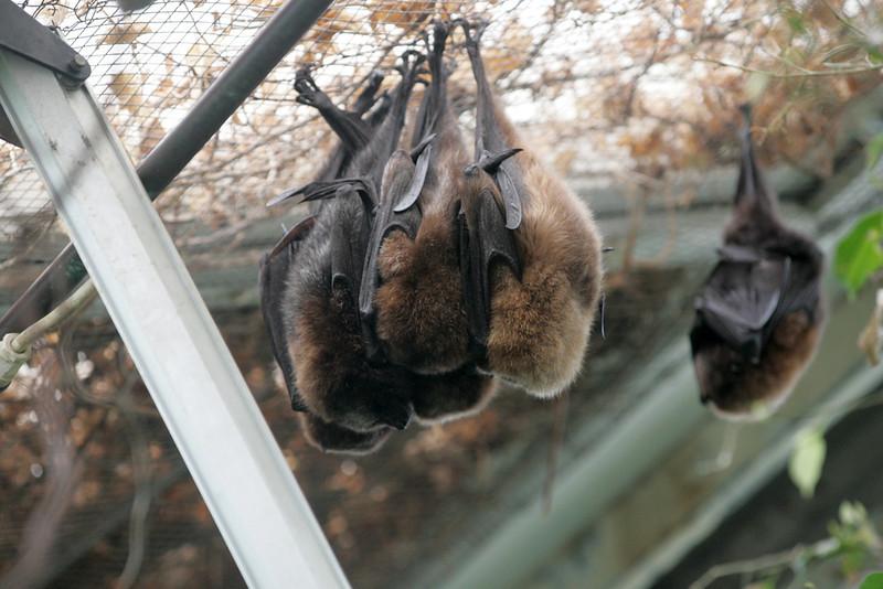 Newquay Zoo 359.jpg
