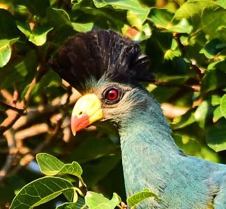 BIRDS UGANDA - Jan.2019