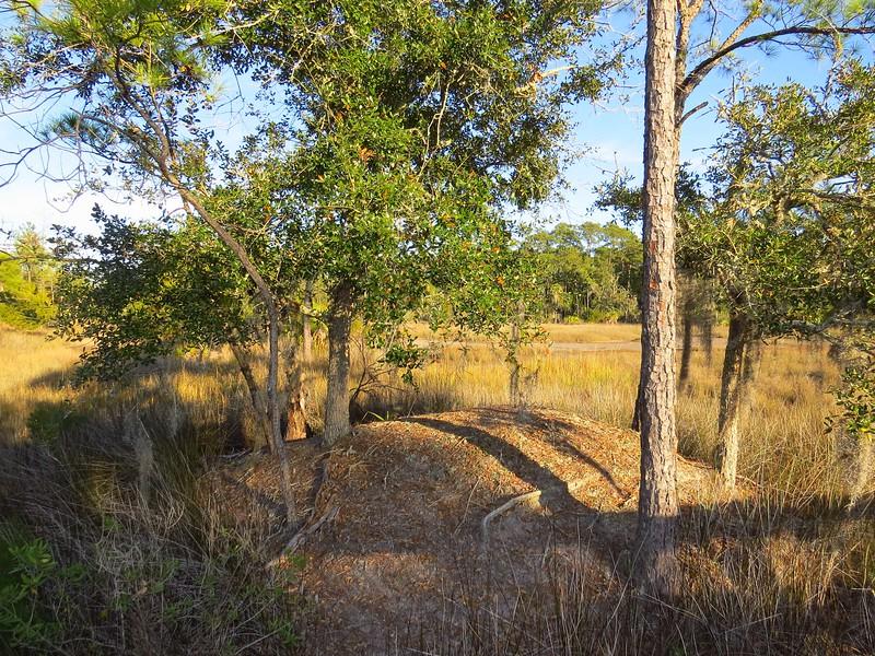 Skidaway Island State Park, Savannah, Georgia (6).JPG