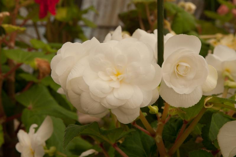 2009 09 06_White Flower Farm_0142.jpg