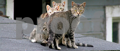 study-shows-outdoor-cats-detrimental-to-wildlife