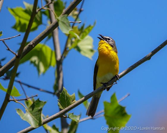 Brumley North, Durham, NC - 2020 NC Pandemic Birding