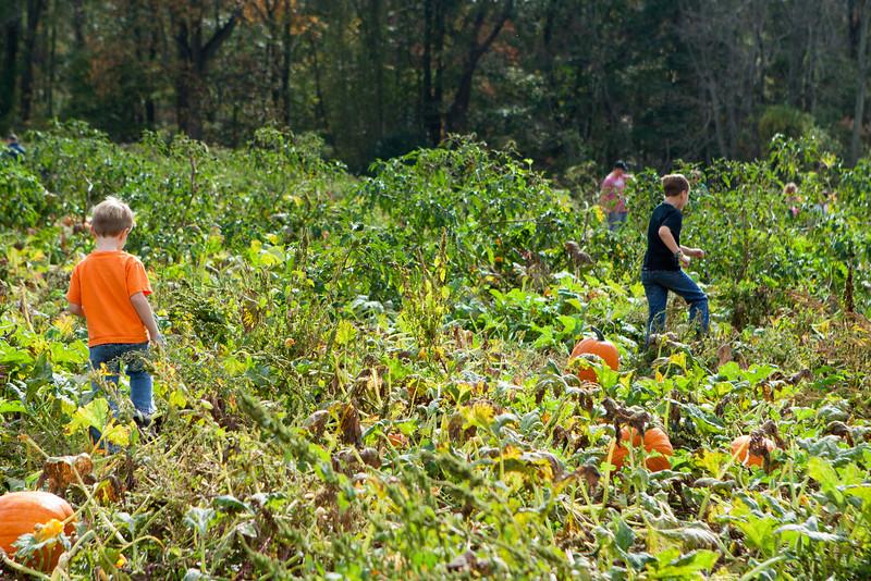 20131019_ramseys_farm_0101.jpg