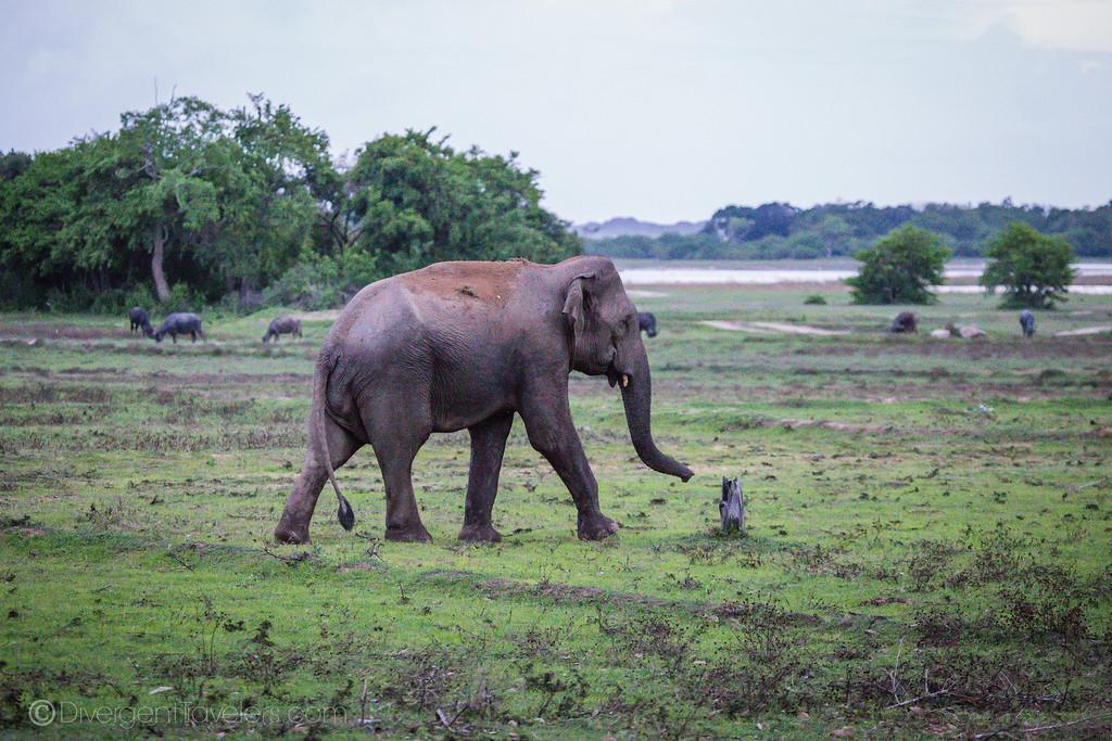 Arugam Bay Sri Lanka - Kumana National Park Safari
