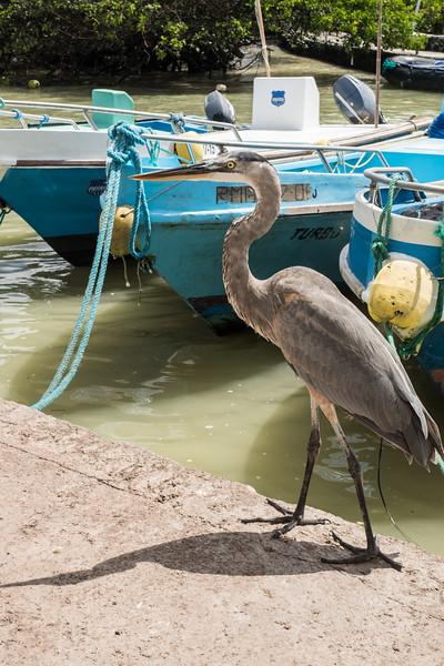 Galapagos-Best-113.jpg