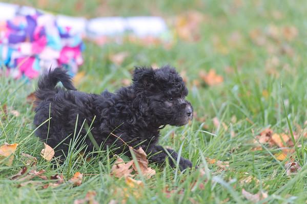 Puppies 10-1-2020