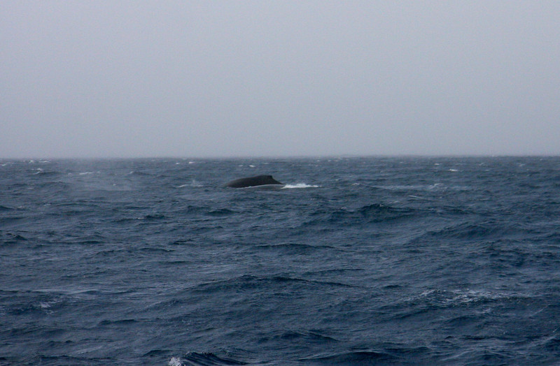 My not so great whale pics, but hey, we saw whales!
