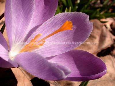 016-flower-nlg-27mar05-7521