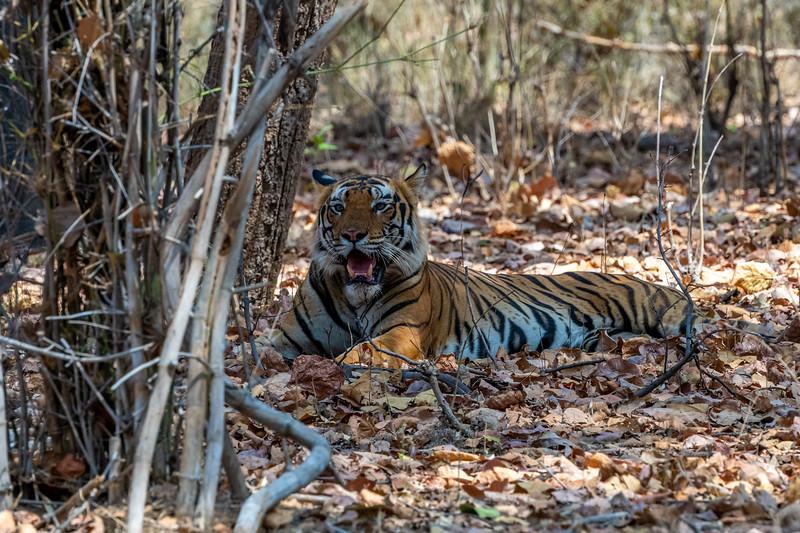 India_April_2019-51.jpg