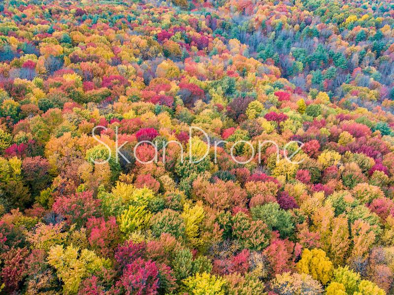 Fall in Upstate