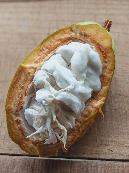 costa rica cacao-2.jpg