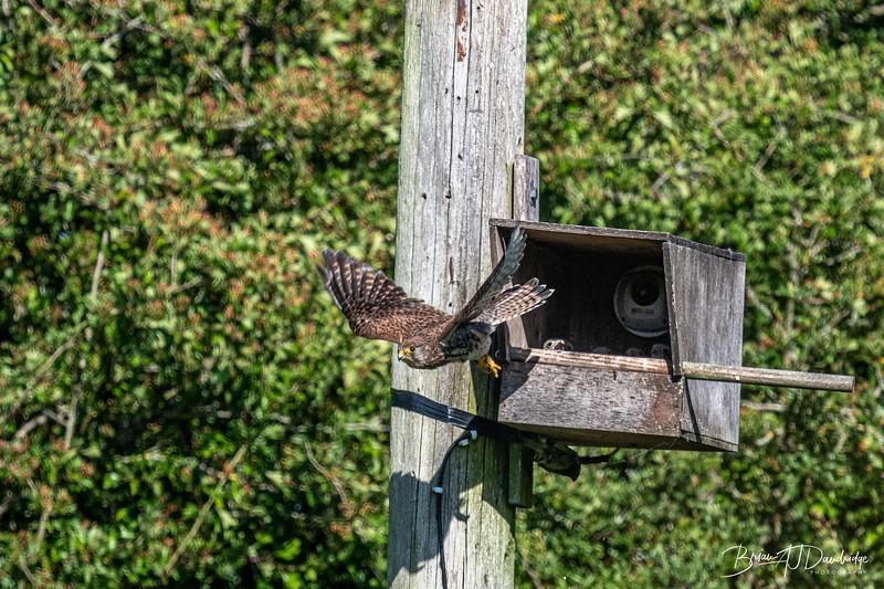 Woods Mill_850-4202.jpg