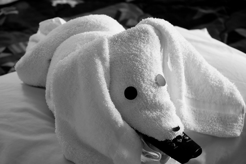 Towel_Critter.jpg