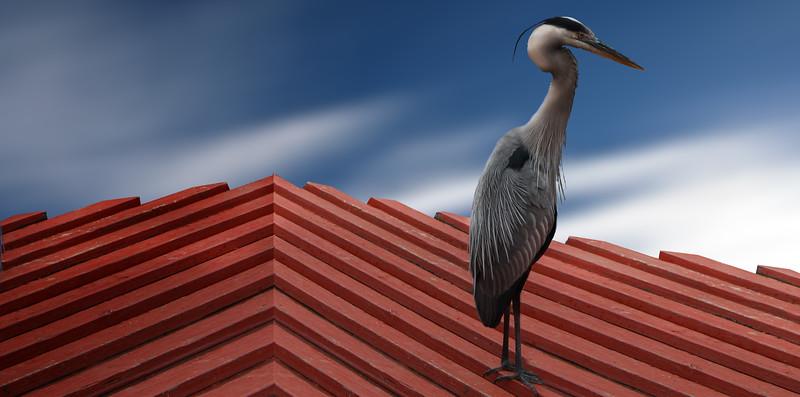 heron-orlando.jpg