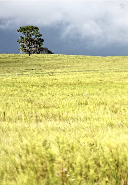 www.asharpphoto.biz - Lonely Tree HDR