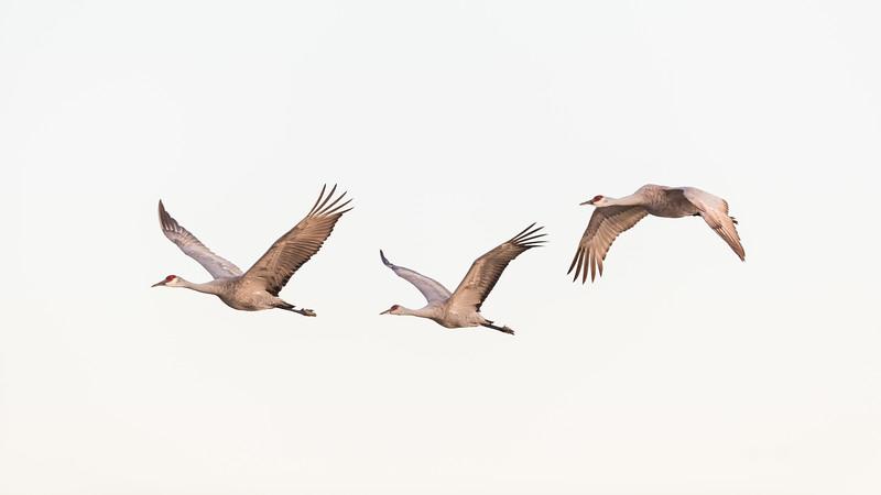 Crane18-5081.jpg