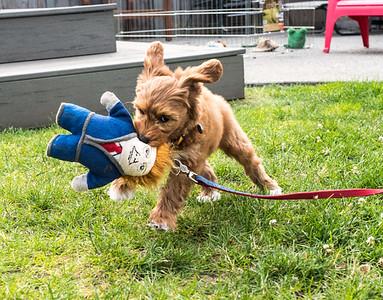 Best of dog Calendar 2020 Vision