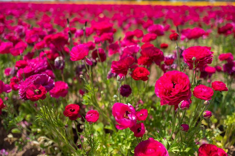 Spring Flowers A-132.jpg