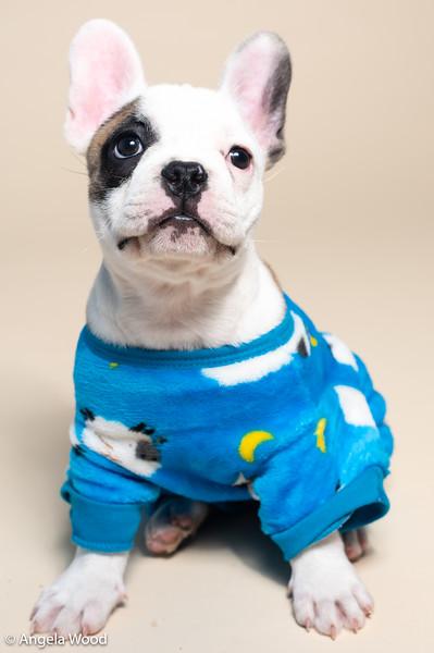 Puppies55.jpg