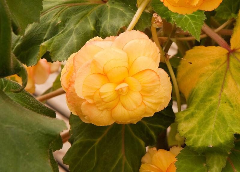 2009 09 06_White Flower Farm_0139_edited-1.jpg