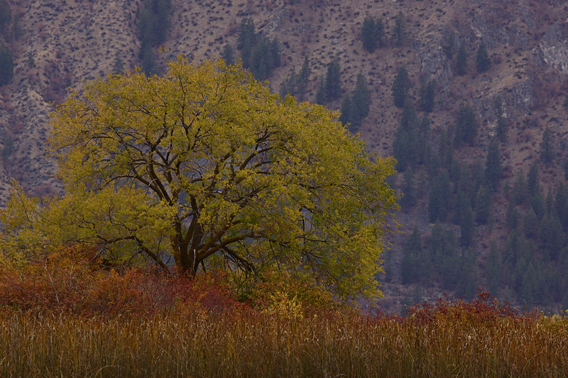 A lone tree shows off it's autumn brilliance in the marshes near Brewster