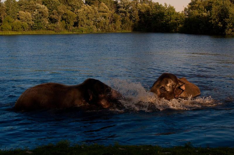 african safari Park-Canada-26.jpg