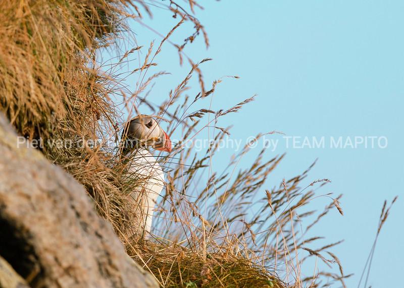 Piet van den Bemd Photography