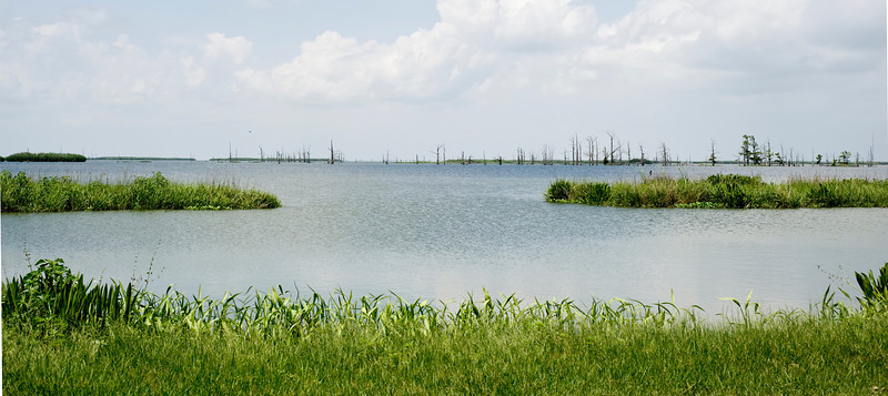 Example of where a channel has breached the marshes and is turning into open sea.