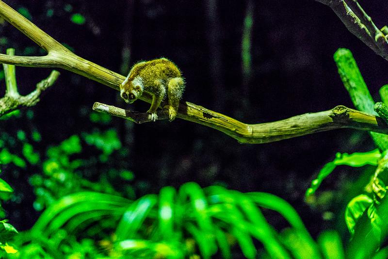 Night-Safari-9774.jpg