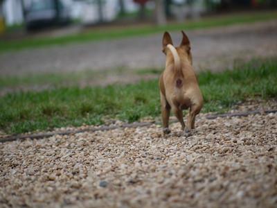 North shore Dog Park St. Pete