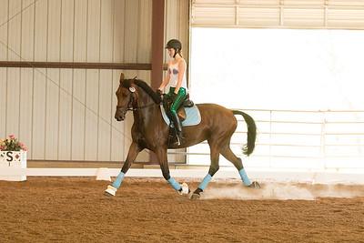 Horse 624