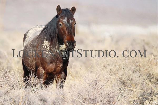 Nevada Mustangs Jan 2021