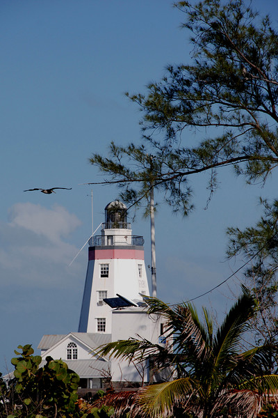 Light House and Pelican.jpg