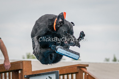 08-25-2017 Illinois Southtown K9 NADD AKC National Qualifier Dock Diving