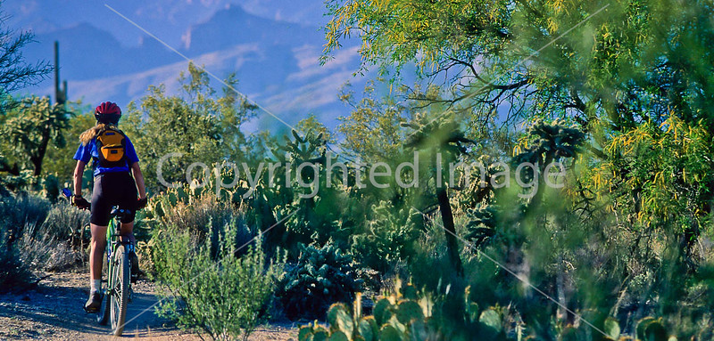 Arizona - Saguaro National Park - Mountain Biker on Cactus Forest Trail (Biking)