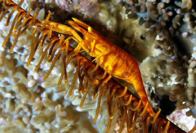 shrimp_5.jpg