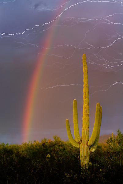 Saguaro (Carnegiea gigantea) against summer monsoon sky with rainbow and steaks of lightning. Sonoran Desert near Tucson, Arizona.