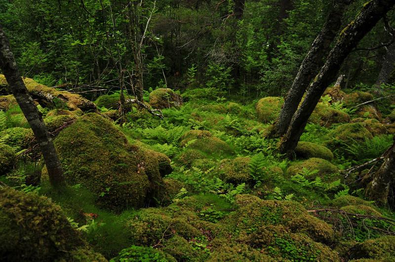 Sunndalsfjorden-34.jpg