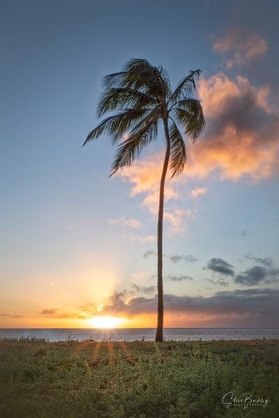 Maui IV