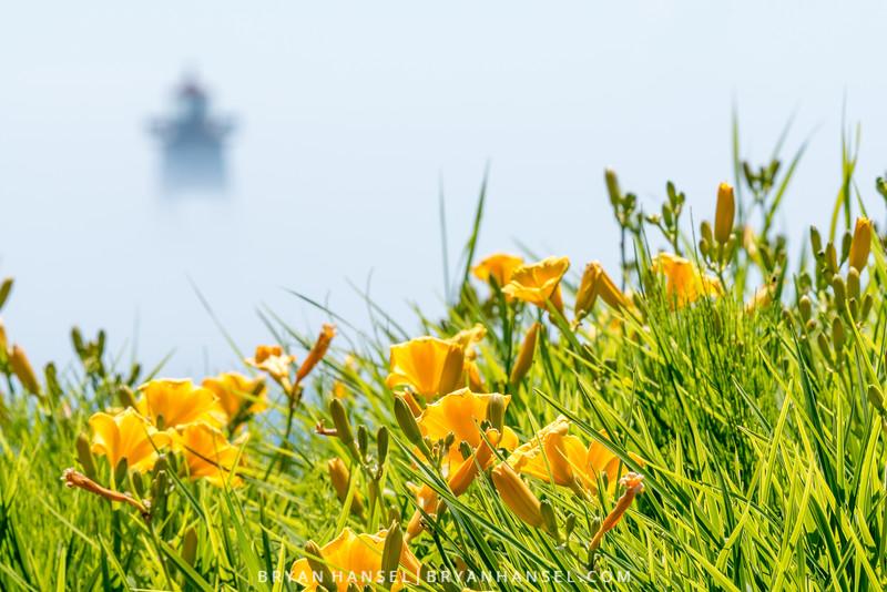 Summer Fog over the Harbor