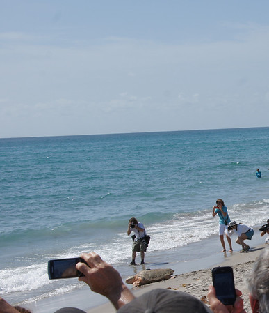 turtle releasing loggerhead park beach7-7-12