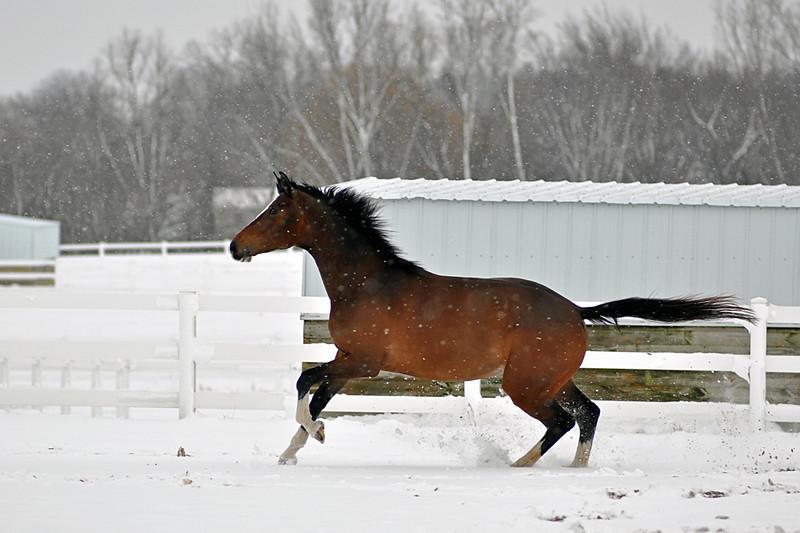 Snowy Dalanta 058 RETOUCHED.jpg