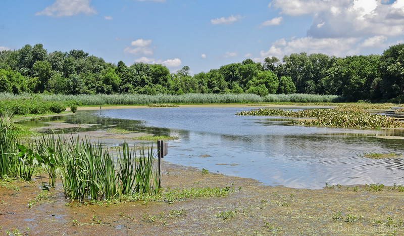 at the John Heinz National Wildlife Refuge at Tinicum