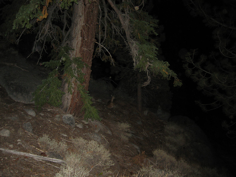 deer laying in the early morning hours