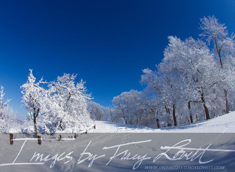 snow_3368 copy.jpg