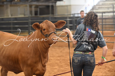 Owned Show Ringshots - Reds, Pairs & Bulls
