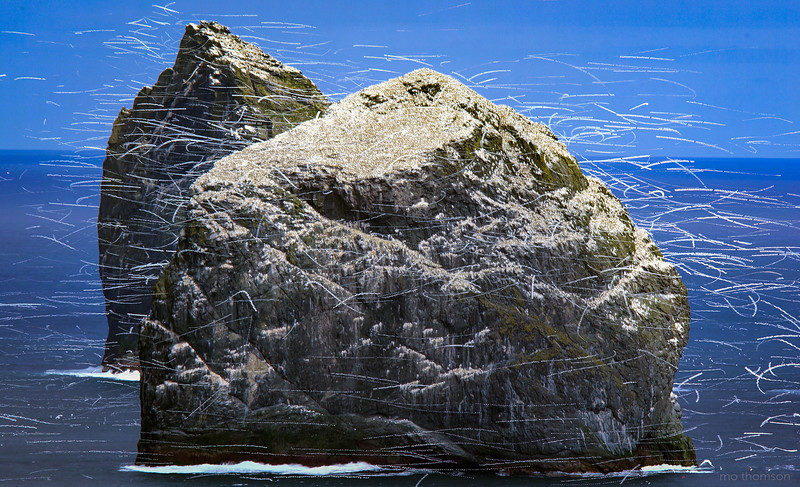 MoThomson_May2016_St_Kilda_Boreray_stacks_bird_trails.jpg