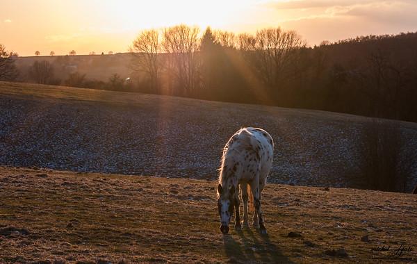 Coucher de soleil et chevaux