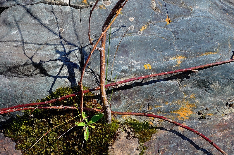 twigs and vines 2-28-2013.jpg